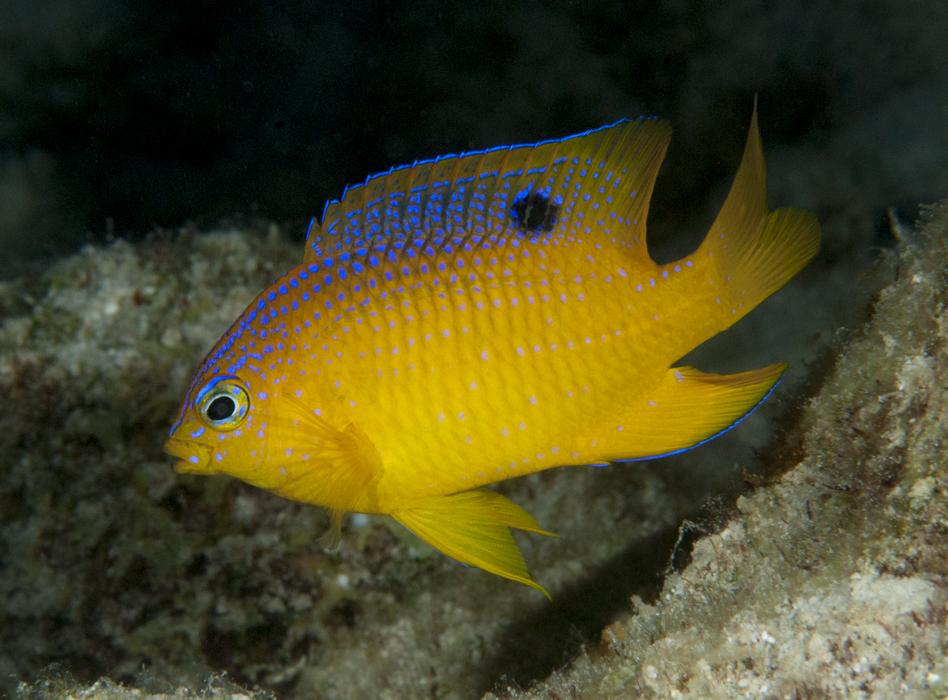 Underwater Photographer Terry Brasher's Gallery: Bonaire Sept 2010 ...
