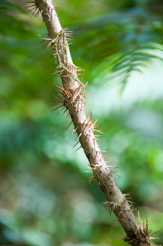 thorny-stem-2 | Tusen Takk II