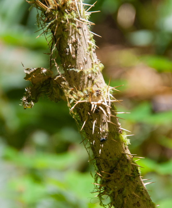thorny-stem | Tusen Takk II